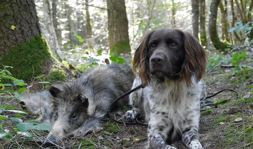 Pixer Jixer with wild boar