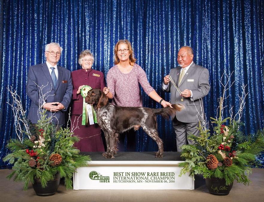 Aster's Grandsire, Zandor vom Fuchseck wins IABCA Best in Show Rare Breed Adult