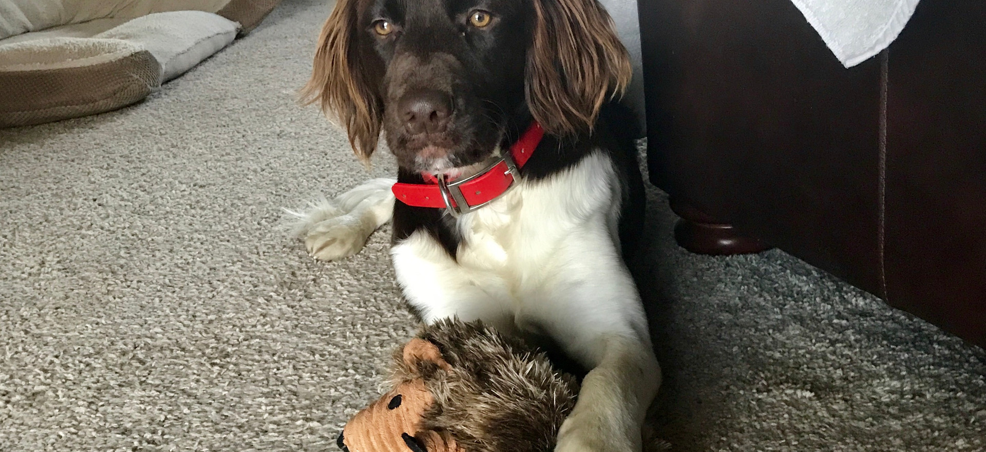 What a posser with her hedgehog.