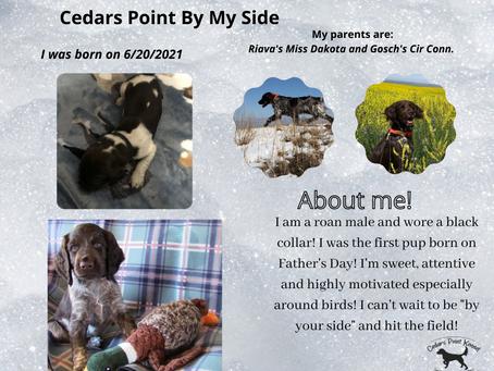 Cedars Point B Litter Pups!