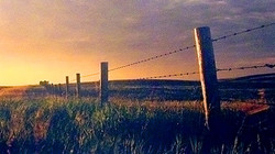 Barbed Fence Evening