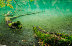 Tree Branch in Water