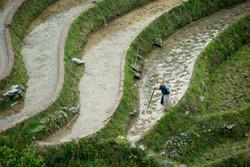Farmer in Rice Terraces