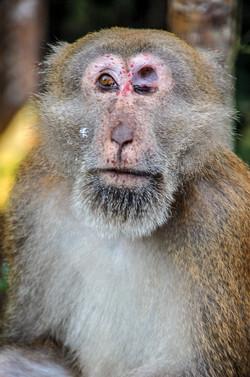 One Eye Monkey