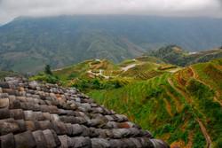Roof Rice Fields