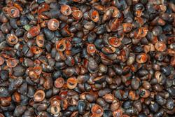 Mini Sea Shells