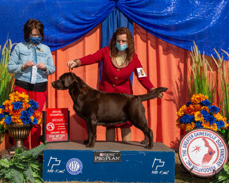 Bronze GCH BOB 4 pt.Shari Kirschner Greater Gainesville Dog Fanciers Assoc. 2021.JPG