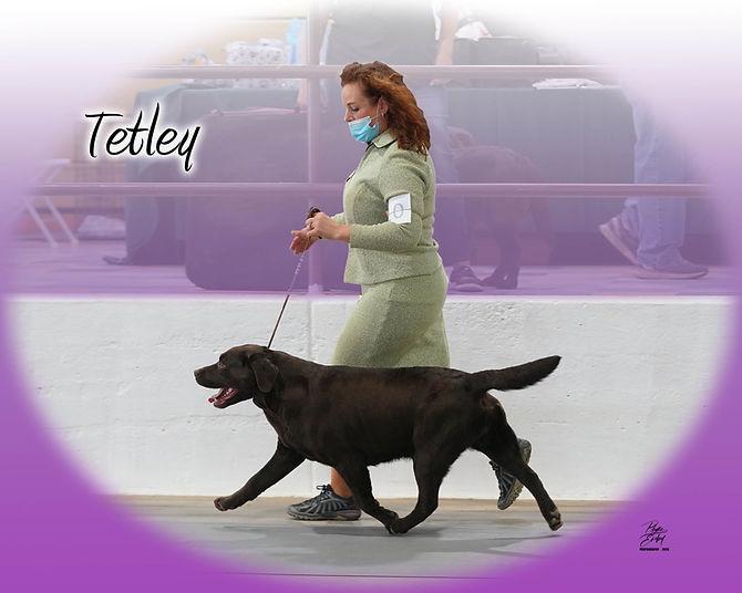 Tetley Movement digital PE_01424.jpg