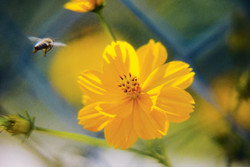 Vol d'abeille