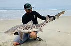 Leopard shark fishing with www.americanseafishing.com
