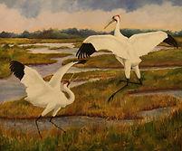 hazelip whooping cranes.jpg
