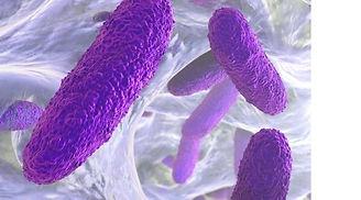 Klebsiella-pneumoniae.jpg