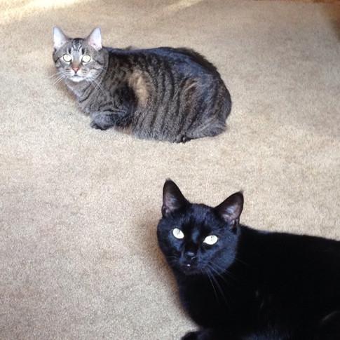 My precious furbabies, Marco and Misty