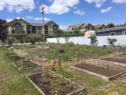 Community Garden 2.jpg