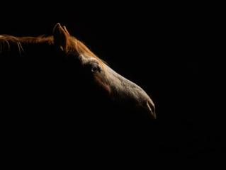Strobe Lighting & Equine Photography