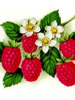 Фруты 10