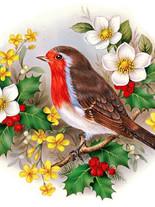Птицы 10