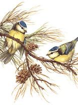 птицы 31