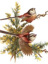 птицы 33