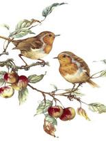птицы 32