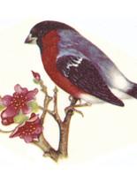 Птицы 8