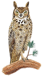 Owls__2_-removebg-preview_edited.png