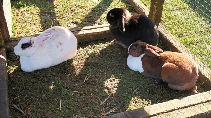 Pickle, Thumper and Peanut