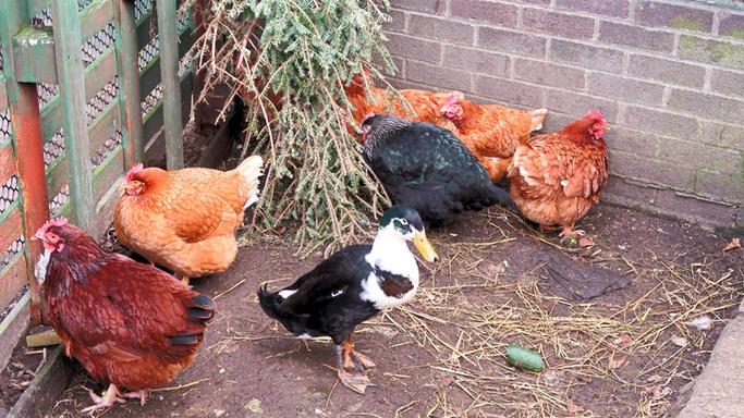 Pixey, Annie, Pumpkin, Emerald, Rosie, Barbara, Penny
