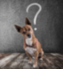 Canva - Dog with quizzical expression.jp