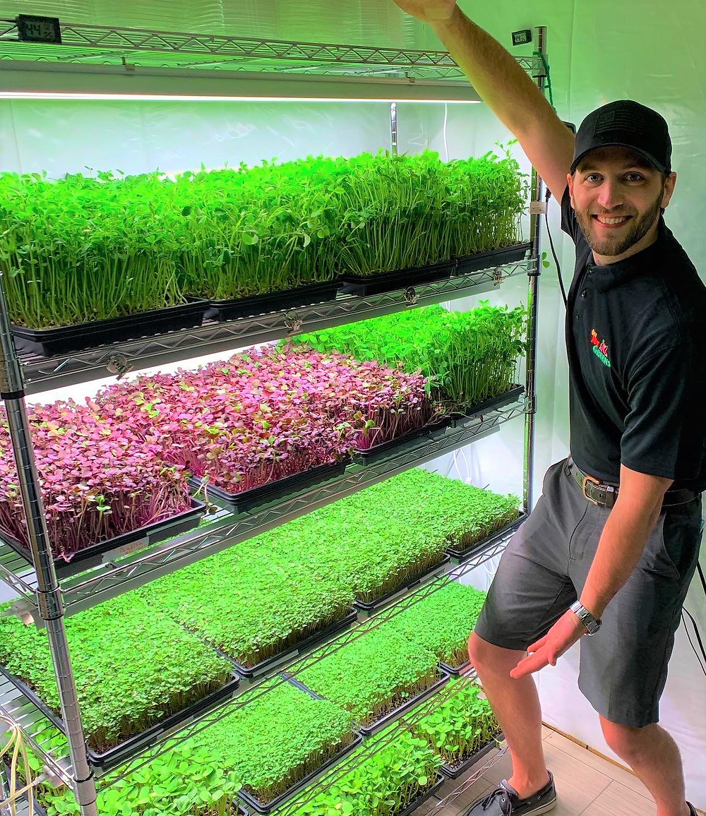Trays of greens fill his living room-turned-greenhouse