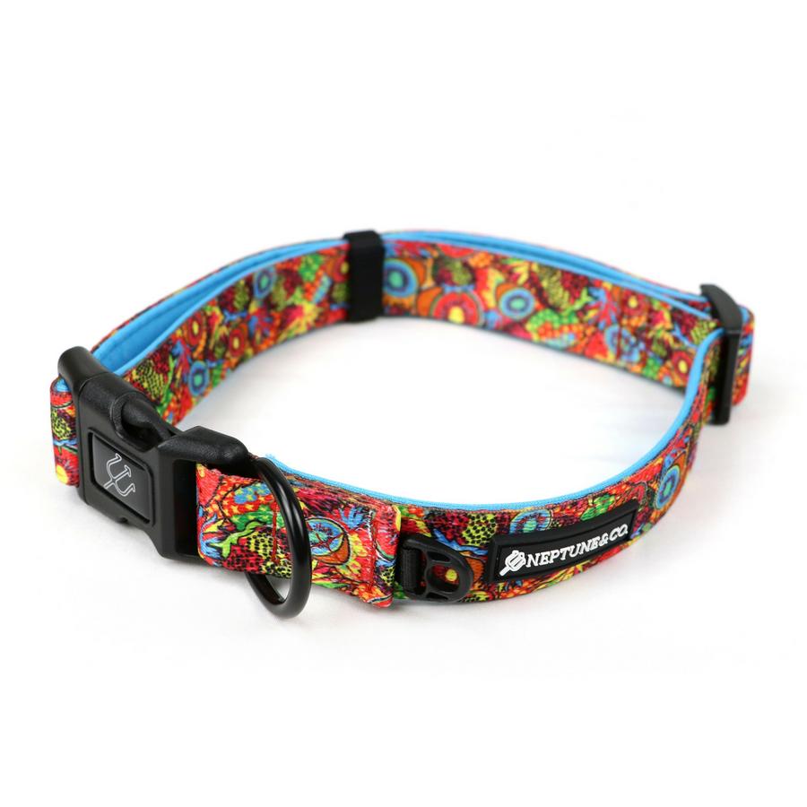 Pup Art Collar