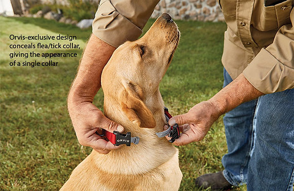 Conceal a Collar Personalized Flea and Tick Dog Collar