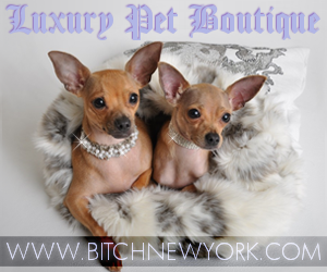 Luxury Pet Boutique