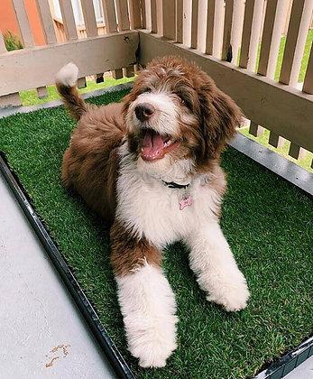 Dog Potty Grass