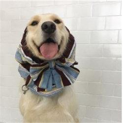 Oh My Dog Snood Blue