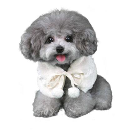 Nora Dog Caplet White