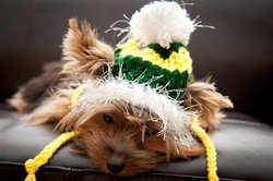 Green Fuzzy Dog Hat