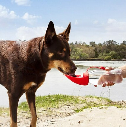 Leaf Dog Water Bottle