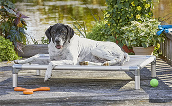 Raised Breathable Cooling Dog Cot Bed