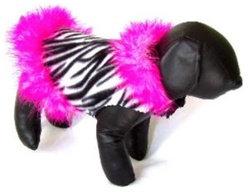 Zebra Floozie Dog Jacket