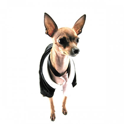 Black And Silver Velvet Silk Dog Tux