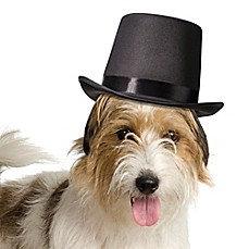 Lillian Rose™ Dog Top Hat
