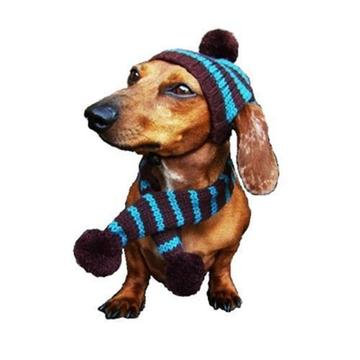 Turquoise/Brown Striped Dog Hat and Scarf