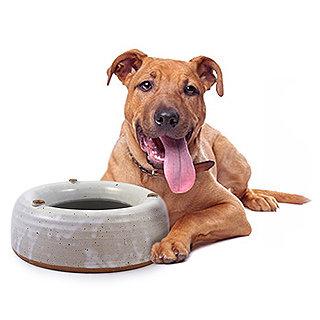 Heavy Weight No-Splash Stoneware Dog Water Bowl