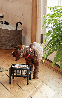 Wrought-Iron Mission-Style Dog Feeder
