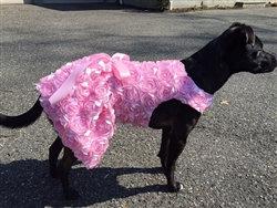 Pink Bouquet Dog Dress Pink
