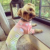 CuteBone Dog Pajamas