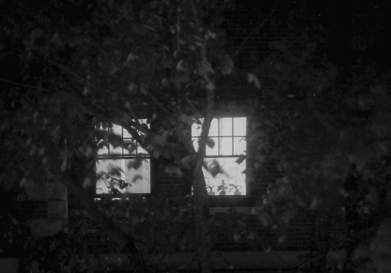 bW TREE AND WINDOW.jpg