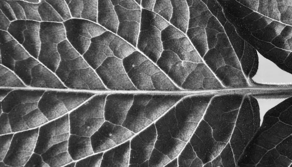 Unreal Leaf