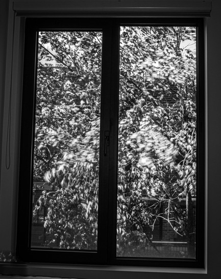 branches moving bw.jpg